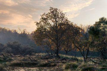 Landschaftsnatur in den Niederlanden von Steven Dijkshoorn
