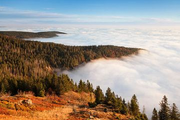 Nebelmeer am Feldberg, Schwarzwald von Markus Lange