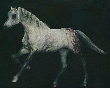 Arabisch paard in galop