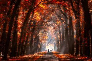 Herfst kleuren van