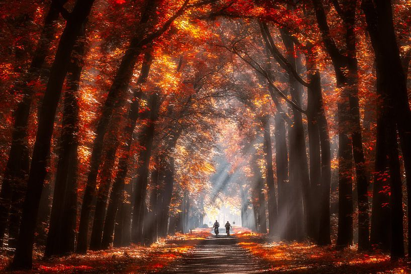 Autumn colors sur Edwin Mooijaart