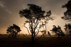 Bomen bij zonsopgang van Monique Struijs