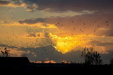 Zonsondergang von Cor Bak