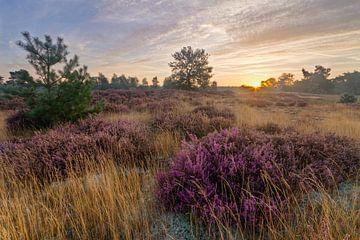 Laatste Heide in het Eerste Licht van Joep de Groot