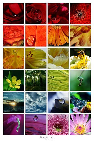 Collage - Beauty of colors van Angelique Brunas
