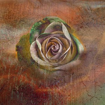 voorbijgaande roos van Claudia Gründler