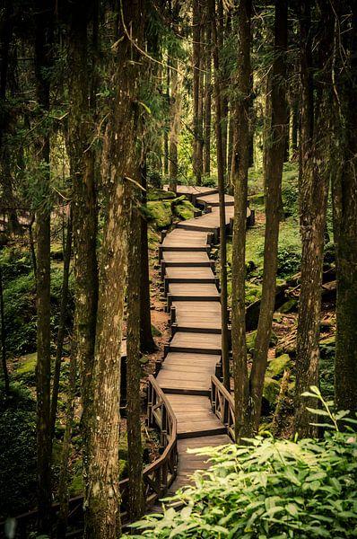 Boardwalk in Alishan National Park van Sven Wildschut