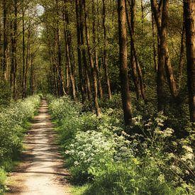 Voorjaarsbos van Yvonne Blokland