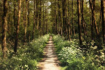 Voorjaarsbos