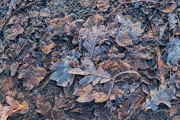 Herbstblätter von Clazien Boot