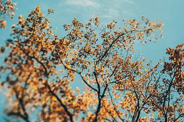 Gouden herfst - boomtoppen van Jonathan Schöps | UNDARSTELLBAR