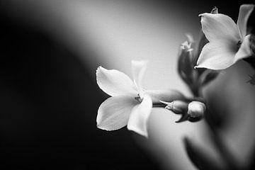 zwart wit bloemen van Kristof Ven