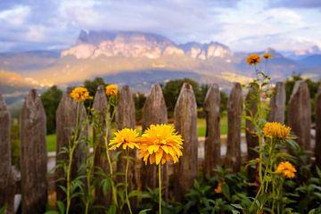 Bloemen in de Alpen van Yajie Wang-Campagne