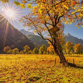 """Goldener Herbst im Karwendel - hier am """"Großen Ahornboden"""" von Einhorn Fotografie"""