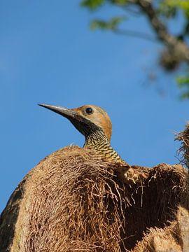 Nieuwsgierige vogel Cuba van Lin McQueen