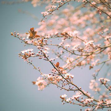 Roze Droom sur Foto NVS