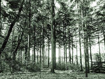 Groen bos van Karin Stuurman