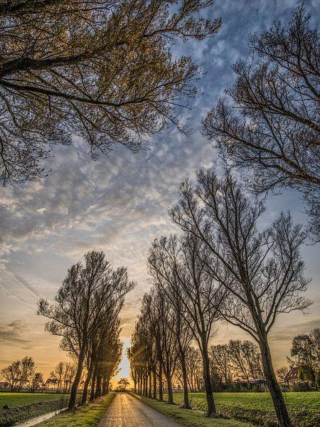 Bomenrij en zonsondergang op het Friese platteland nabij Schettens van Harrie Muis