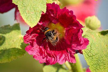 Bij op bloem van Simdwlf