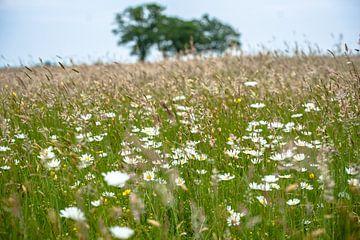 Natürliche Felder und Wiesen mit blühenden Pflanzen und Gräsern von Fotografiecor .nl