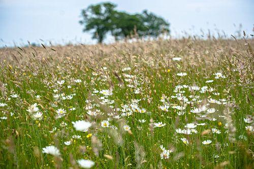 Bloeiende veldbloemen en grassen