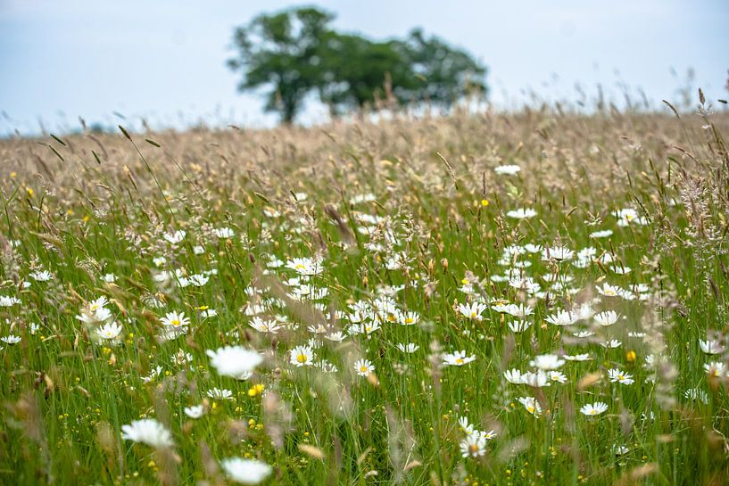 Bloeiende veldbloemen en grassen van Fotografiecor .nl