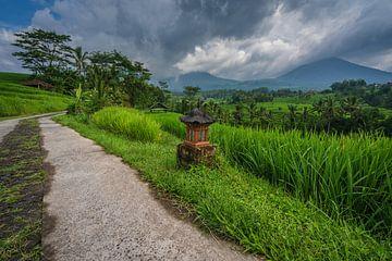 Kleiner Feldweg durch die Reisfelder von Jatiluwih auf Bali, Indonesien von Anges van der Logt