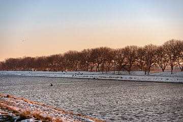Vögel im Schnee entlang des Kanals durch Walcheren von Percy's fotografie