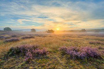 Zonsopgang in de Westruper Heide van Michael Valjak
