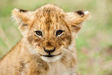 Leeuw welp van Peter Michel