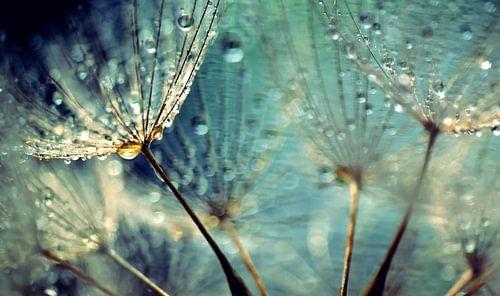 Dandelion blue spirit
