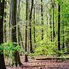 Amsterdams Bos van Hendrik-Jan Kornelis thumbnail