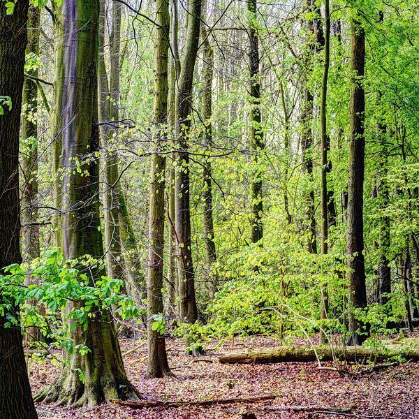 Amsterdams Bos van Hendrik-Jan Kornelis