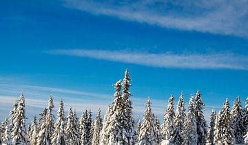 Sneeuw op de bomen in Scandinavië van Reis Genie