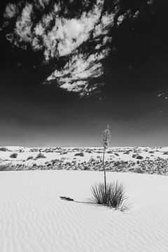 Monochrome d'empreinte White Sands. sur Melanie Viola