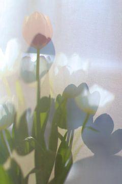 Tulpen Pastelltöne von Marianna Pobedimova