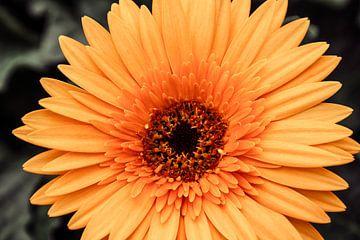 Gele bloem sur Stedom Fotografie