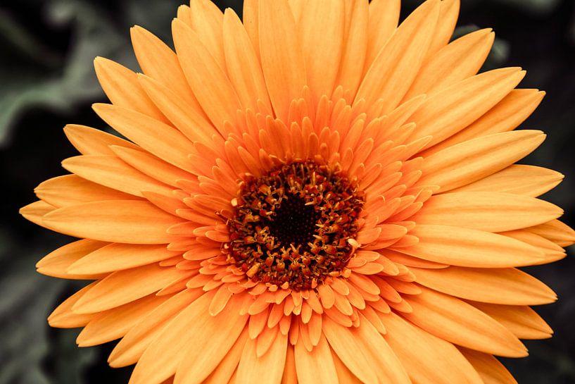 Gele bloem van Koop je Canvas