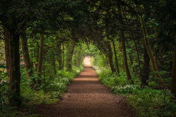 Allee im Wald im Frühling von Tomas van der Weijden