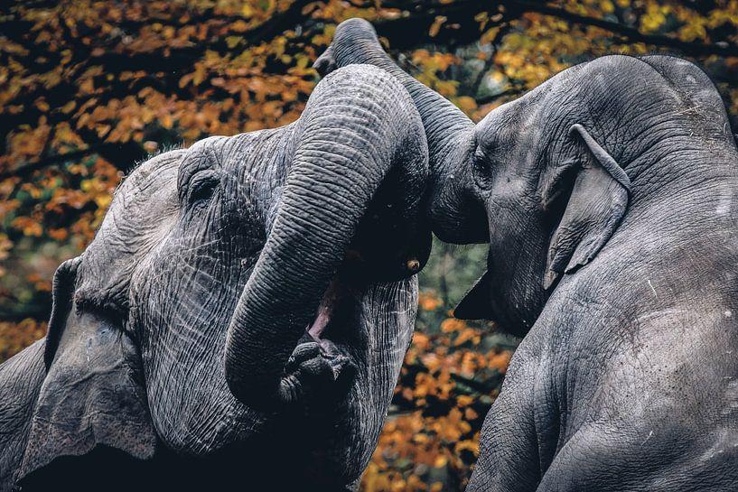Elephants van Mark Zanderink