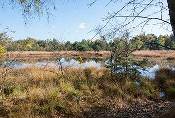 natuurgebied bij gildehaus von Compuinfoto .