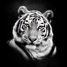 Tiger Porträt von Jacky Gerritsen