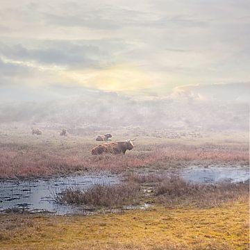 Schotse Hooglanders  in de mist van Peter Mensink