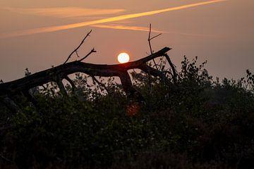 Sonnenaufgang von Koos de Vries