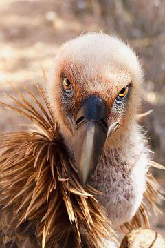 LP 70487027 Close up roofvogel van BeeldigBeeld Food & Lifestyle