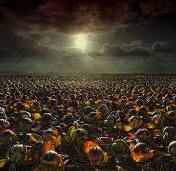 Hollands Kolenveld van Kenneth Stamp