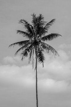 Zwart wit palmboom op Bali van Ellis Peeters