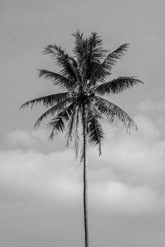 Zwart wit palmboom op Bali