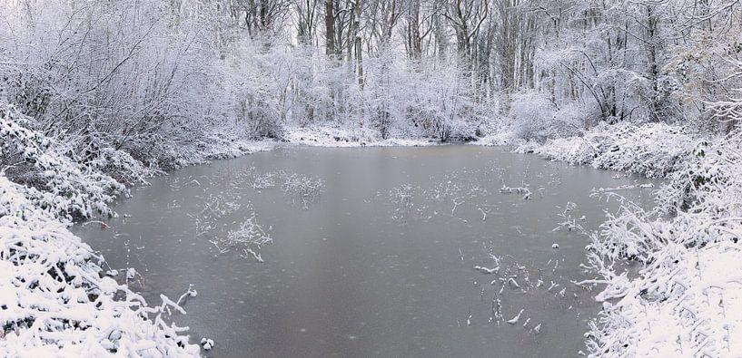 Cold as ice van Wim van D