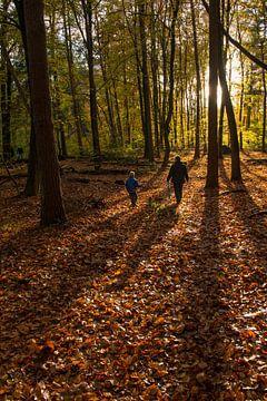 Wandelen in een kleurig bos in de herfst van
